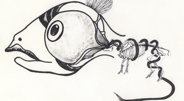 Fish Human Eye
