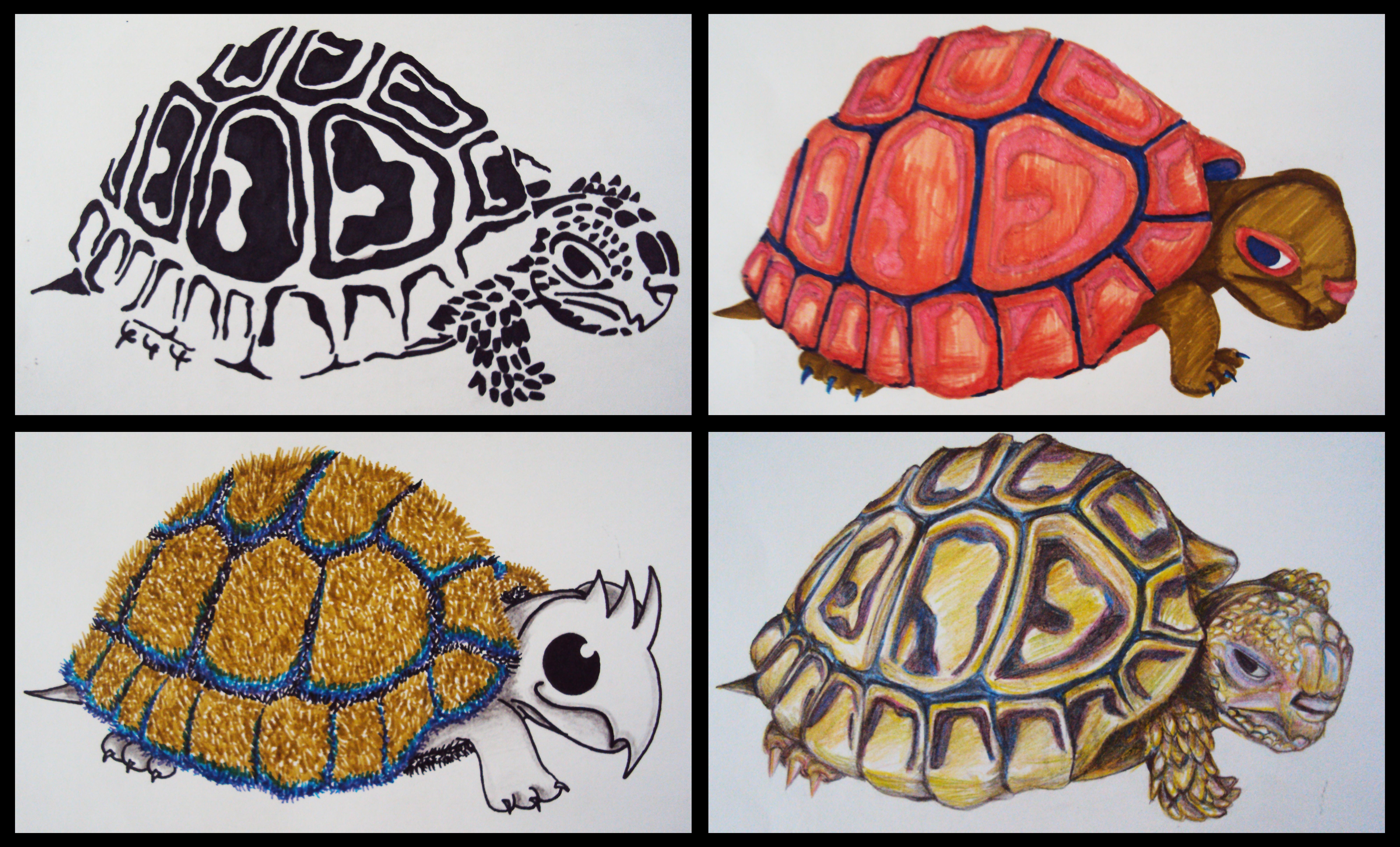 Turtle Types